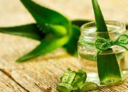 Amazing Benefits of Aloe Vera: Natural tips