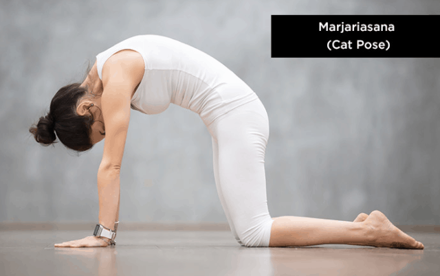 cat pose yoga asana for best fitness body exercise