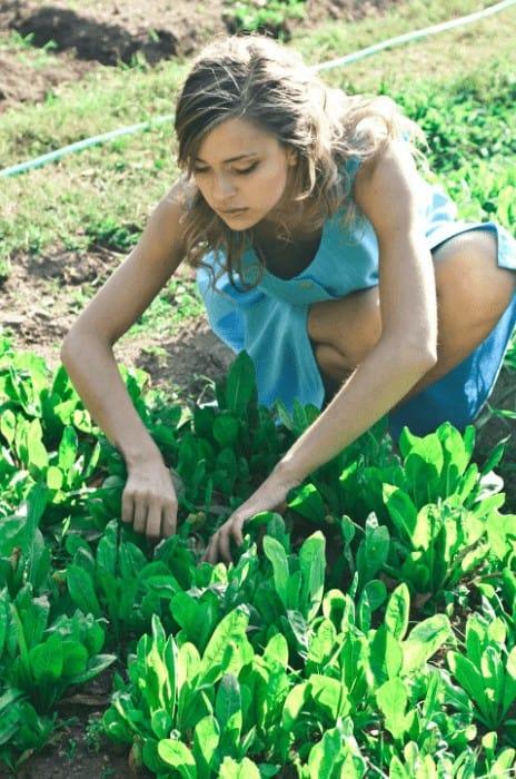gardening is engaging