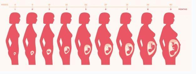 9 months of pregnancy