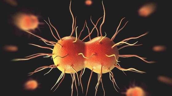 Super Gonorrhea covid 19