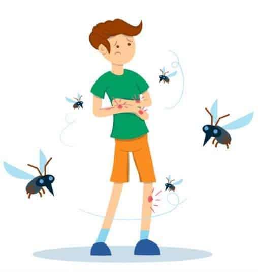 dengue fever mosquitos